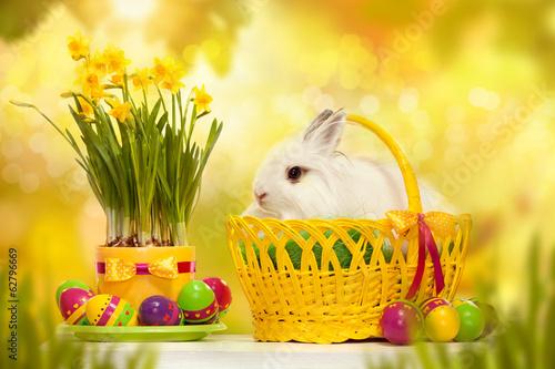 природа кролик цветы тюльпаны яйца пасха  № 271730  скачать