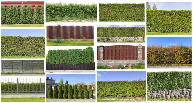 Fragments of a green  hedge set