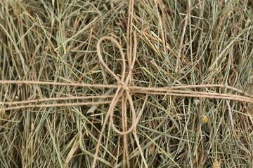 Hay, close up