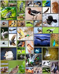 Fotobehang Graffiti collage Collage of birds