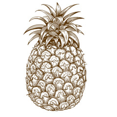 engraving pineapple on white background