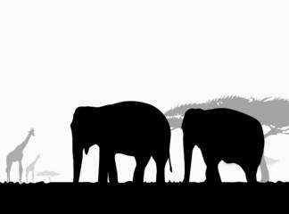 Elephants in African safari-vector
