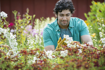 A young man working in a plant nursery, surrounded by flowering plants.