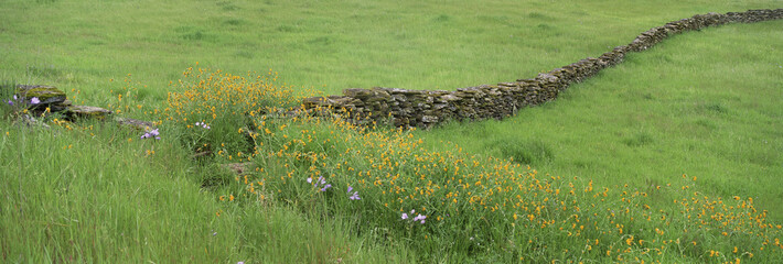 Meadow with stone wall and wildflowers. Wall mural