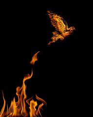 flame dove flying from yellow flire isolated on black