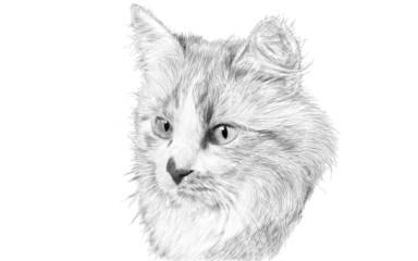 Кошка - рисунок карандашом
