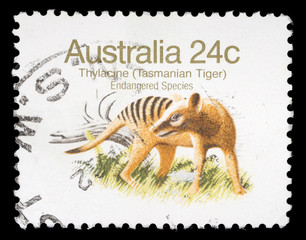 Stamp printed in Australia shows Tasmanian Tiger, circa 1981