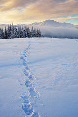 Fototapete - Trail in the snow in the mountains