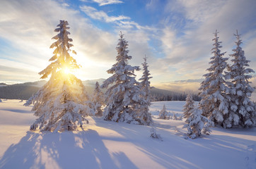 Wall Mural - Sunny winter landscape