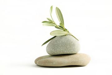 Fototapete - Ramo di ulivo fiorito su ciottoli di pietra