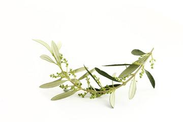 Fototapete - Ramoscello di ulivo fiorito