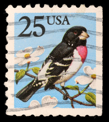 Stamp printed in USA shows Rose-breasted Grosbeak
