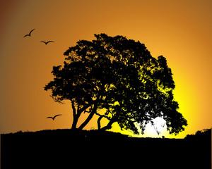 Big tree silhouette, sunset