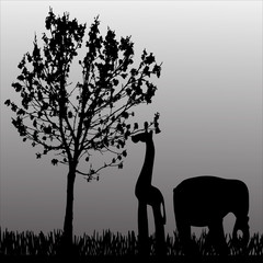 Vector silhouette of animal.