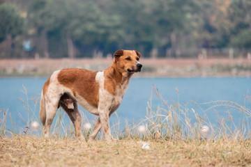 Dog with lake background
