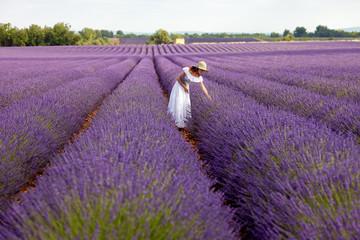Beautiful woman picks lavender in field of violet lavender, Prov