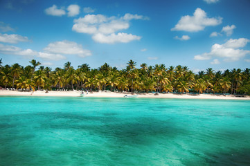 Wonderful palm coastline of Saona Island, Caribbean