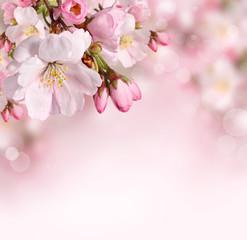 Wiosna kwitnie tło z różowym okwitnięciem