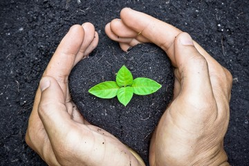 planting tree / growing a tree / love nature / save the world