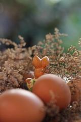 conejo en la granja con los huevoa