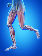 jogging woman with visible blood muscles