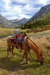 Mountain Horse under Saddle