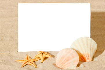 blank white sheet and seashells on the beach