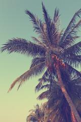Vintage coconut  palm tree