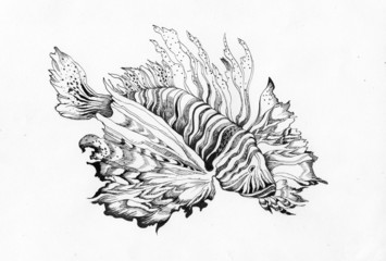 Unusual beautiful fish drawing on white
