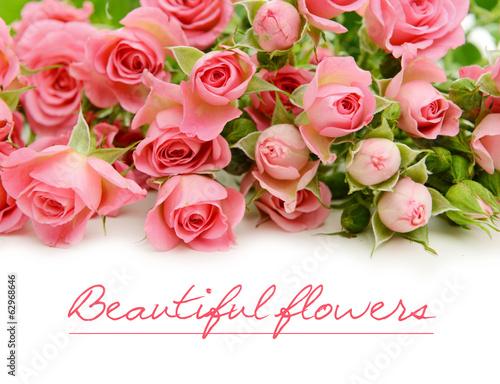 розовые розы обои на рабочий стол в высоком качестве № 130124 загрузить