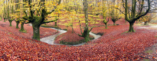 Wall Mural - panorama of forest in autumn