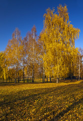 trees growing in park in an autumn season