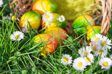 Easter Eggs hidden in Green Grass with Flowers