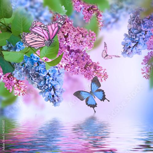 Бабочки подлетающие к цветкам  № 2991722  скачать