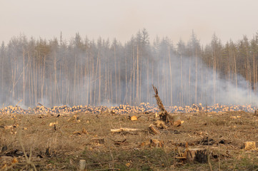 Location deforestation in the smoke of fires