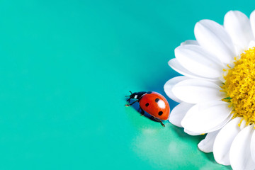 Ladybug and summer flower.