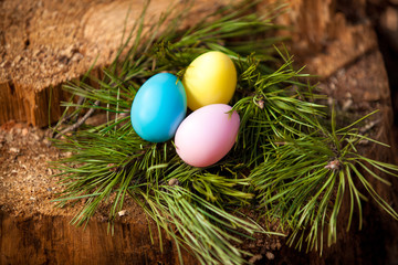 Closeup shot of easter eggs lying in nest of fir tree