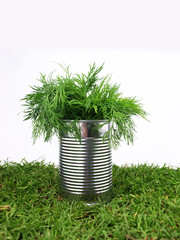 Tin with parsley