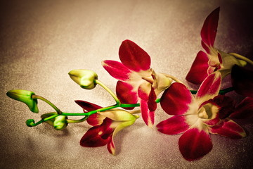 Flower orchids, photo in vintage style