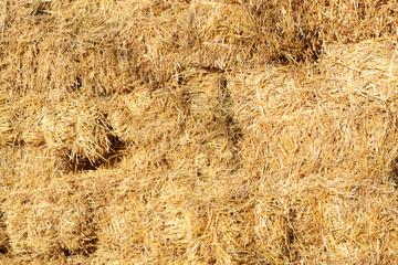 Bales of  wheat straw in countryside at harvest time