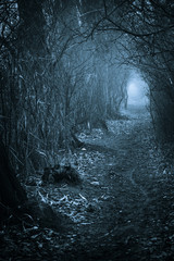 Dark spooky passage through the forest