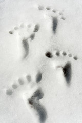Small traces/footprint on snow surface. Closeup. Humor