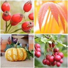 Herbst ernte vier bilder