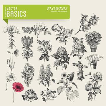 vector basics: garden flowers