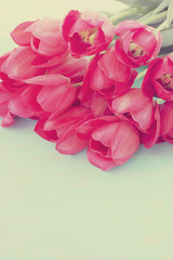pink tulips, tinted