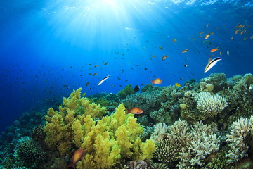 Underwater Coral Reef in Sunlight
