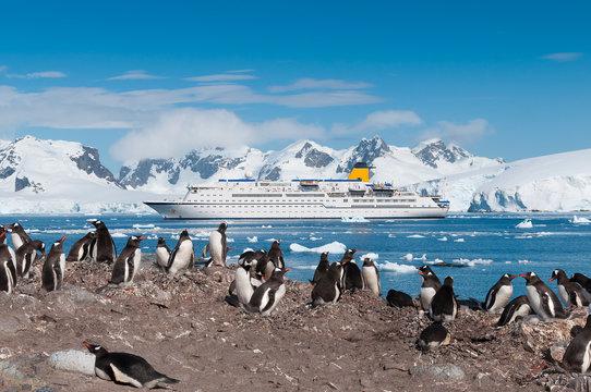 Antarctica penguins and cruise ship