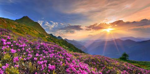 Foto op Plexiglas Zalm Summer landscape in the mountains.