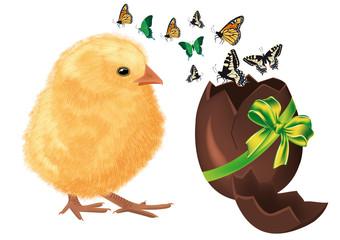 pulcino con uovo