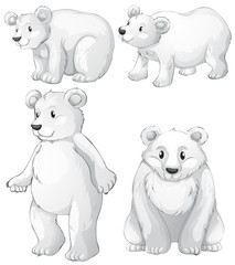 Four white polar bears